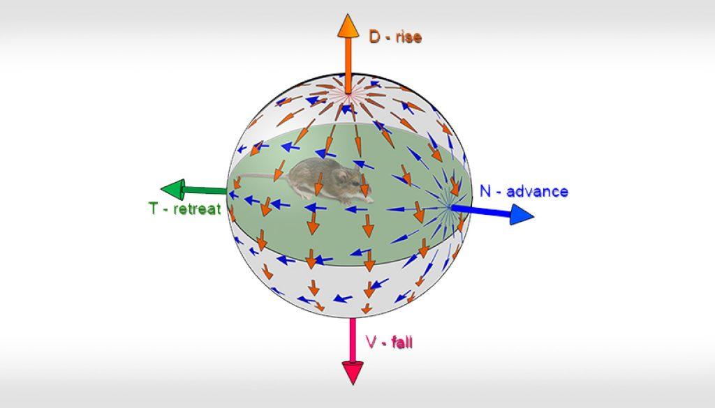 | Shai Sabbah Laboratory | Bra Featur IMGin research | Main-figure_translatory-axes