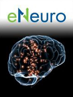 Shai Sabbah Laboratory | Brain research | eNeuro Magazin